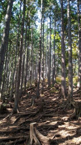 山頂手前の木の根っこ