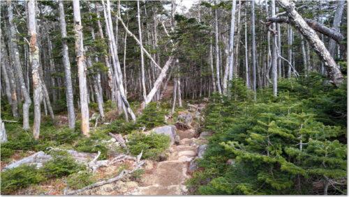 樹林に囲まれた登山道